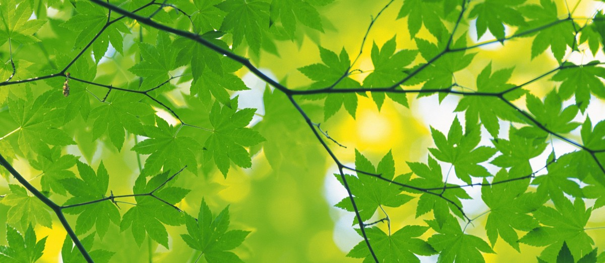 nature_green_leaves-wide
