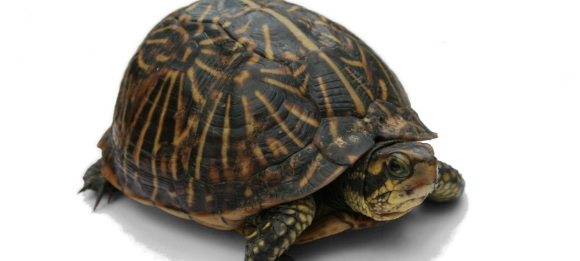 Confessions of a turtle brain