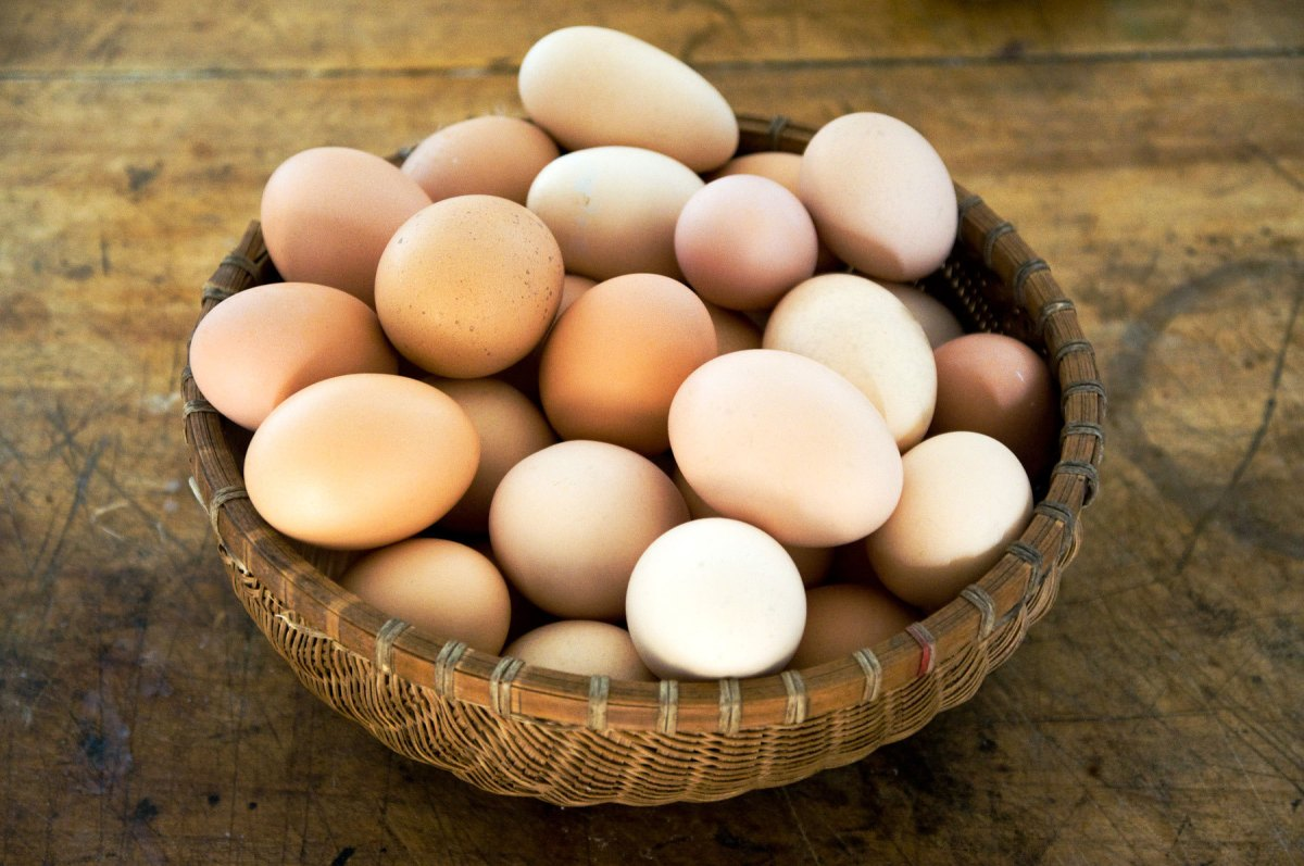 354_1all_the_eggs_in_one_basket