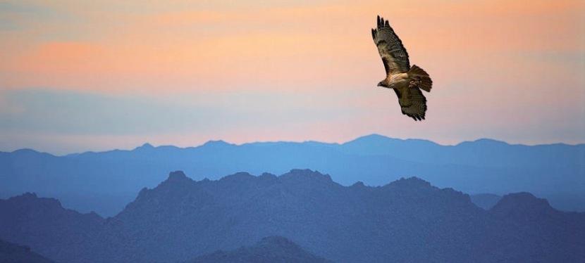 To soar or toplod